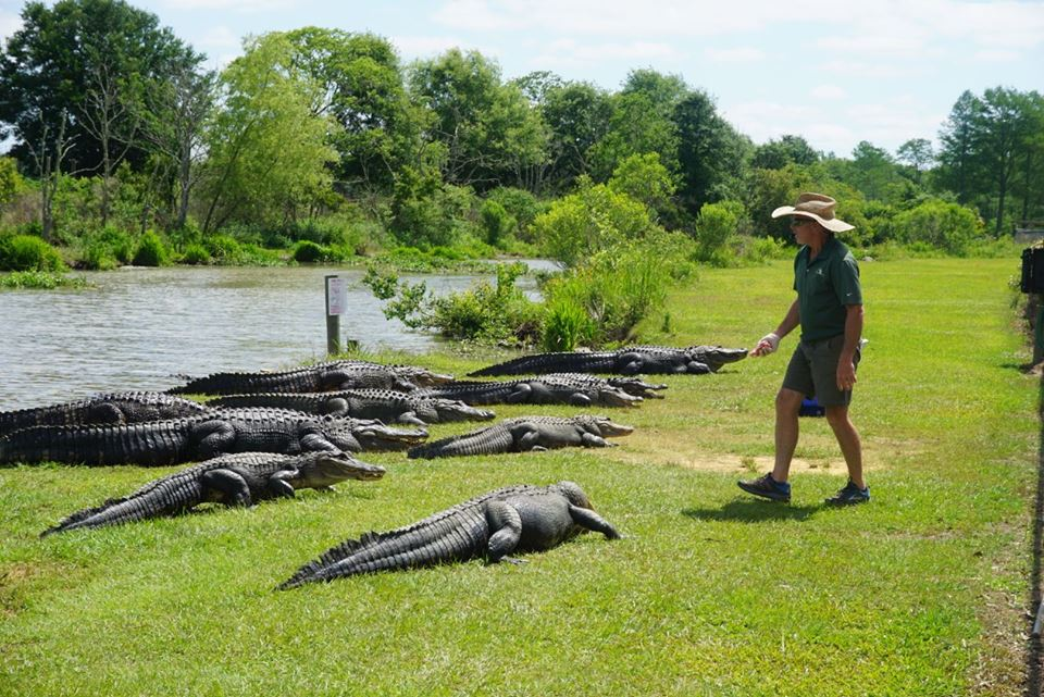 What I Learned Doing PR for an Alligator Farm